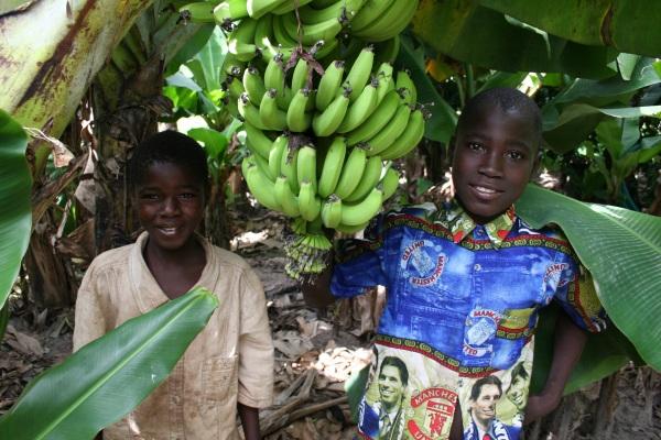 Mali Boys in the Banana Field by Dan S. Morris